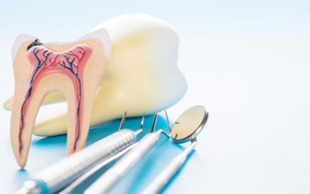 imagem de anatomia do dente